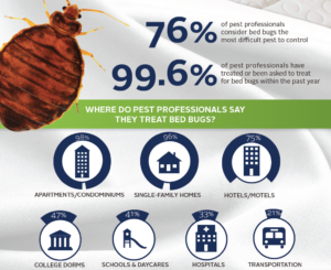 Bed Bug Treatment in Vancouver
