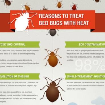 Bed Bug Control Calgary