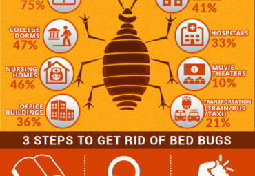 Bed Bugs in Edmonton?