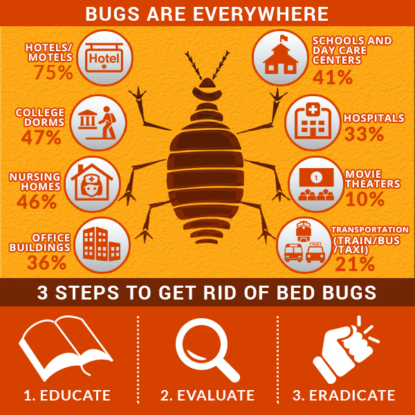 How To Get Rid Of Bed Bugs Exterminator Free Solutions
